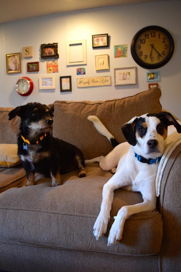 best-pup-friends